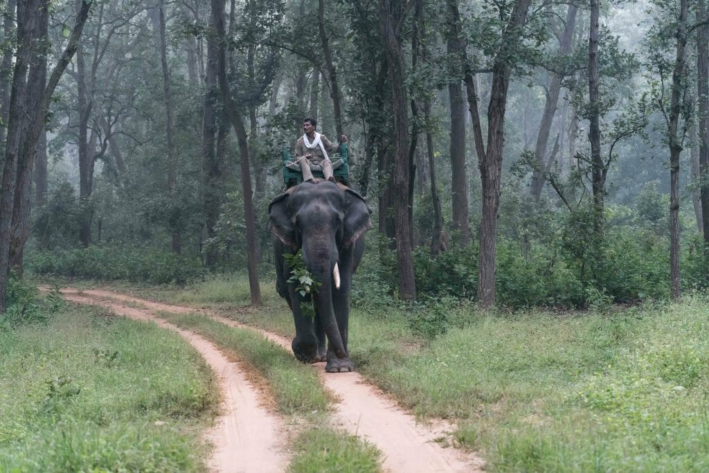 National Park Guide patrolling on elephant in Kanha National Park - Indian Safari